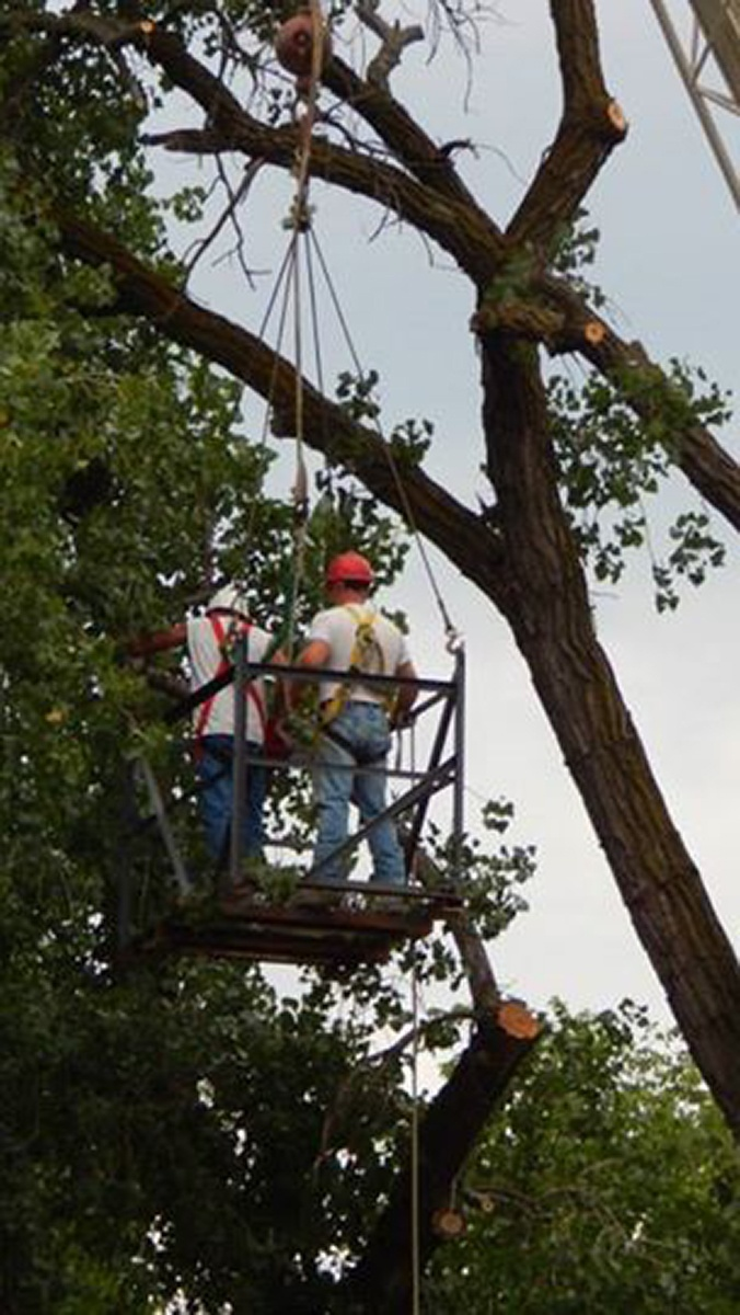 Arbor Jake's Tree Service trimming trees