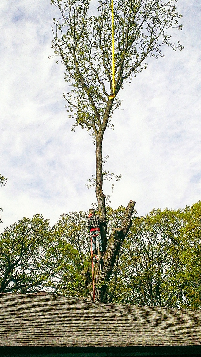 Arbor Jake's Tree Service crew cutting tree top