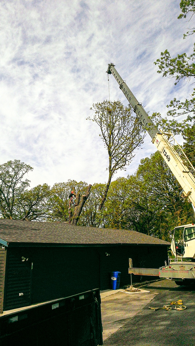 Arbor Jake's Tree Service lifting cut tree top