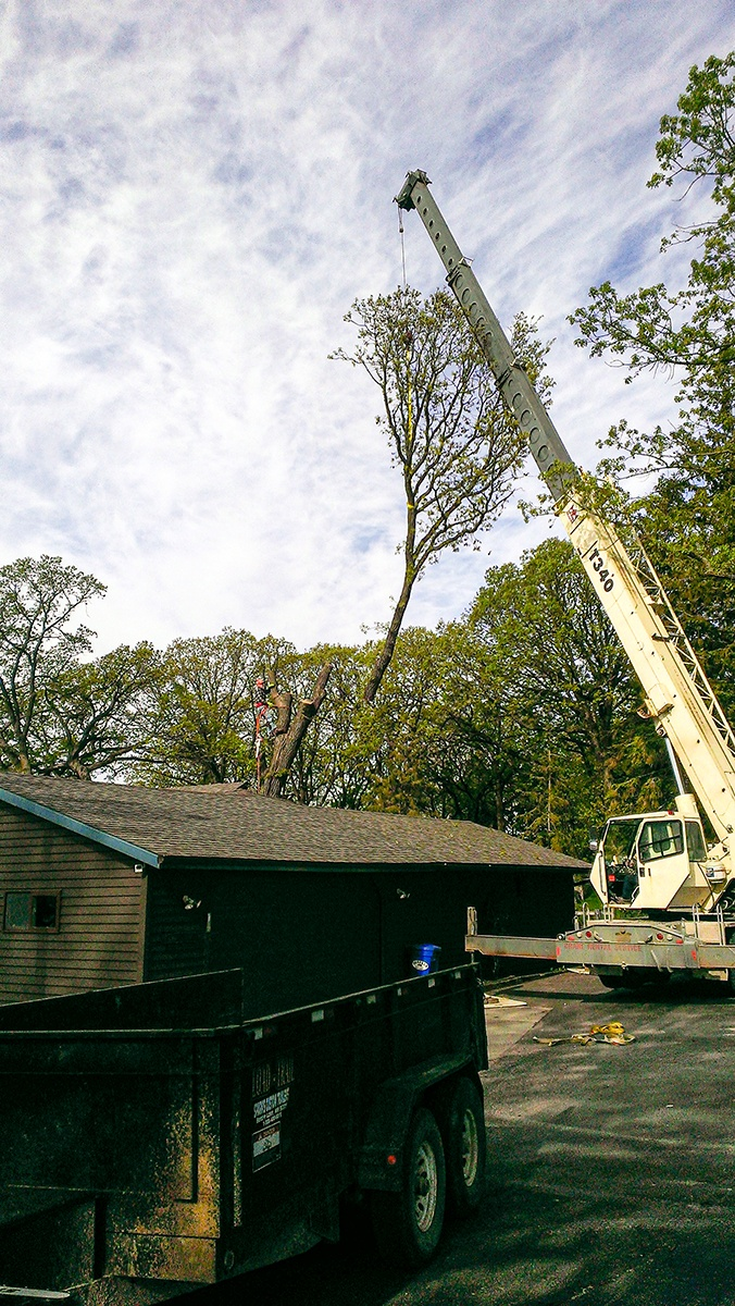 Arbor Jake's Tree Service Crane lifting tree top