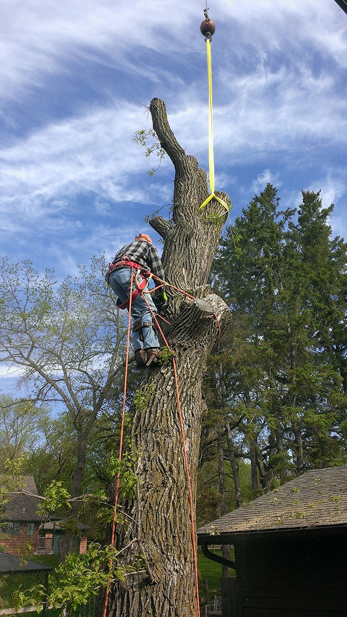 Arbor Jake's Tree Service Crane lifting tree trimmings